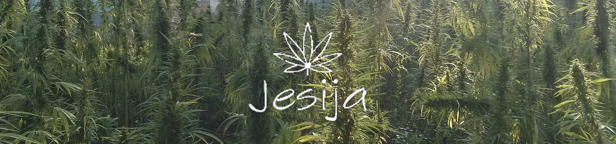 Jesija