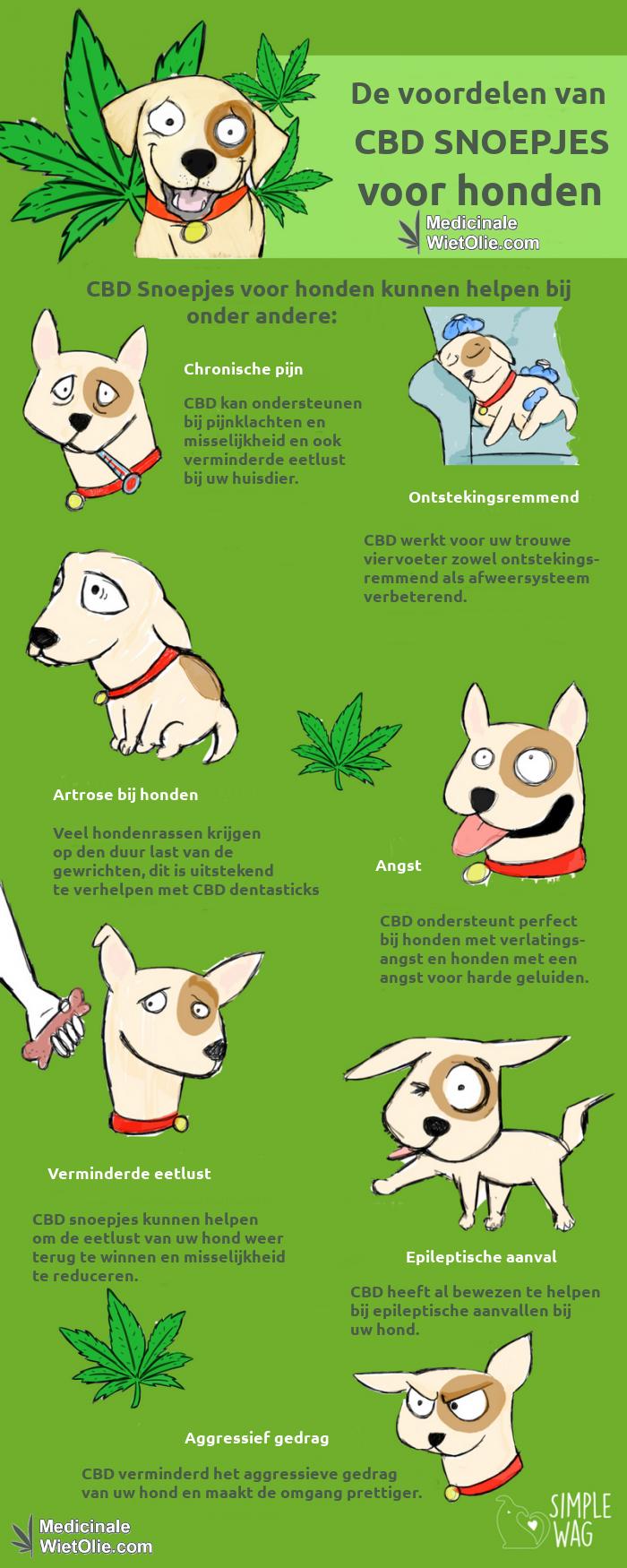 Wat doen CBD snoepjes voor uw hond ?